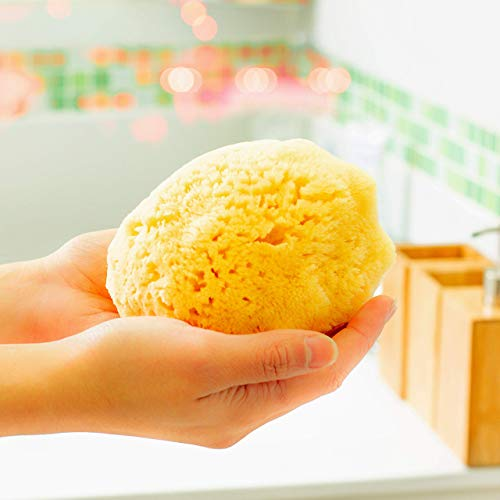 Spugna di mare naturale per il bagno e la doccia Zephyr® (spugna naturale grande 12,5-13,5 cm) Spugna da bagno vegetale per neonato
