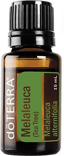 Melaleuca - Albero da tè per olio essenziale, 15 m, di Doterra (non consentito per venderlo) non acquistare.