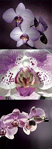 Plage Decorazione Wall Sticker di Orchidee, Vinile, Colorful, 68x 0.1x 24cm