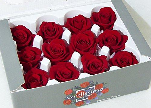 verdissimo 12 Rose Naturali Stabilizzate D.5 cm Circa Non necessita di Luce ne Acqua Regalo San Valentino (Rosso)