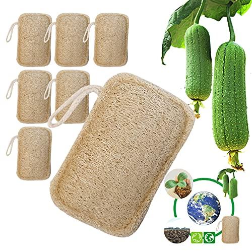 6 pezzi di spugna di luffa organica, spugna di luffa esfoliante, spugna da cucina di luffa, 100% biologica, biodegradabile e compostabile, protezione dell'ambiente naturale, cucina, bagno, campeggio