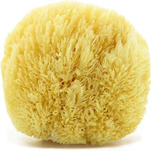 tom&pat® Spugna naturale Grass, spugna da bagno estremamente morbida dal Mediterraneo, per schiuma extra, ipoallergenica, spugna doccia di qualità premium, confezione senza plastica (13-14 cm)