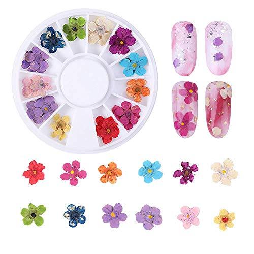 24 Pezzi Nail Dried Flower, Fiore Essiccato per Unghie, Adesivi Floreali per Nail Art, Fiori colorati per Nail Art Veri Essiccati, Fiore Secco Reale di Arte Del Chiodo 3D Decorazione per Nail Art