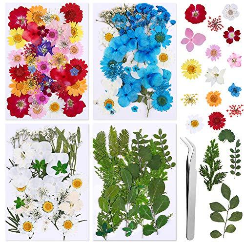134 Pezzi Fiori Secchi Foglia di Fiore Pressata Floreale Naturale per Gioielli in Resina Fai-da-te che Fanno Adesivi Floreali per Unghie Artistiche